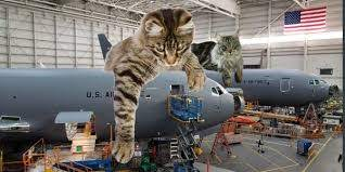 10 pictures of huge cats sitting on military weapons - Business ...